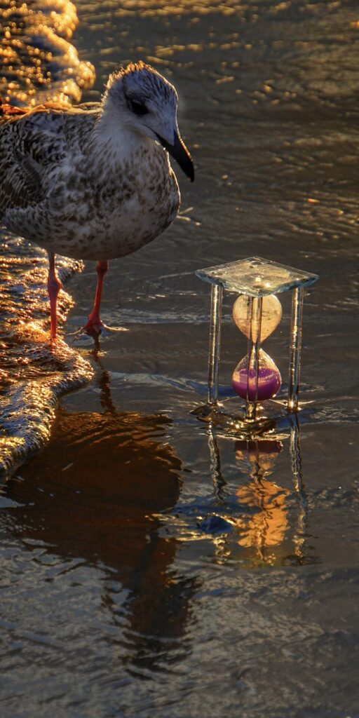 a seagull encounters an hourglass partially buried in wet sand