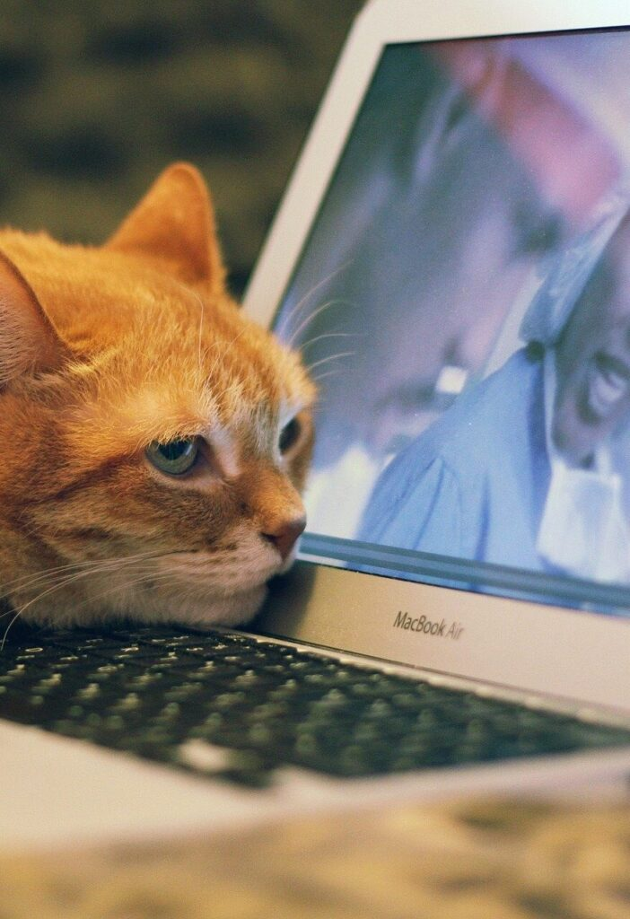 an orange tabby cat rests his head on a laptop keyboard while watching an episode of ER