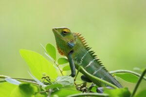 chameleon on a leaf