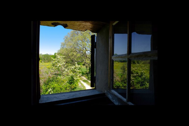 a picture of an open window looking out on a spring view