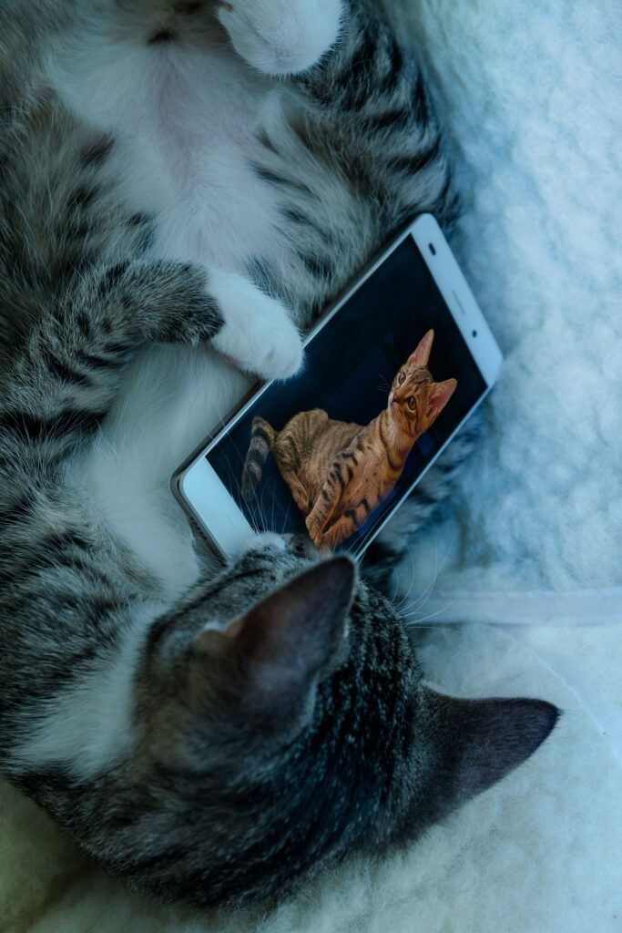 a gray and white cat holds a smart phone with a picture of a brown tabby cat