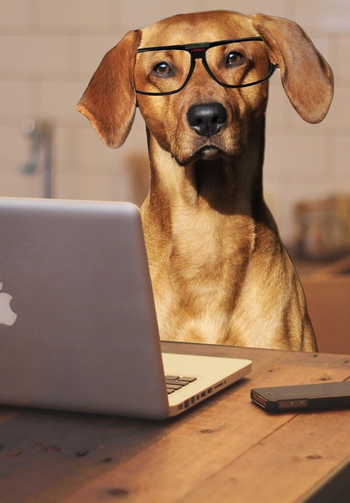 a light brown dog wearing glasses sits at a desk behind a silver laptop