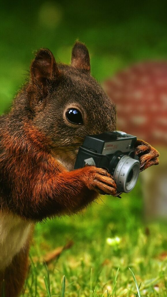 Set against a background of grass and mushrooms, a squirrel holds a tiny camera