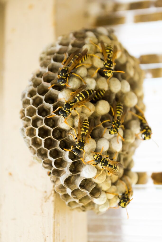 a group of bees work purposefully on building a hive